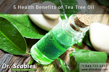 5 Health Benefits of Tea Tree Oil