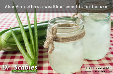 Aloe Vera Offers a Wealth of Benefits for the skin