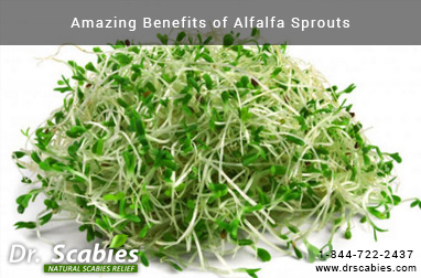 Amazing Benefits of Alfalfa Sprouts