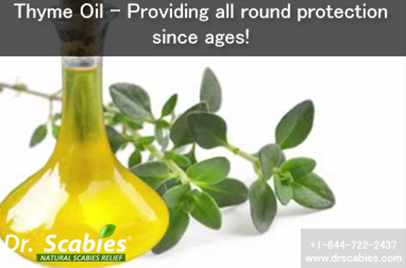 Thyme Oil – Providing all round protection since ages!